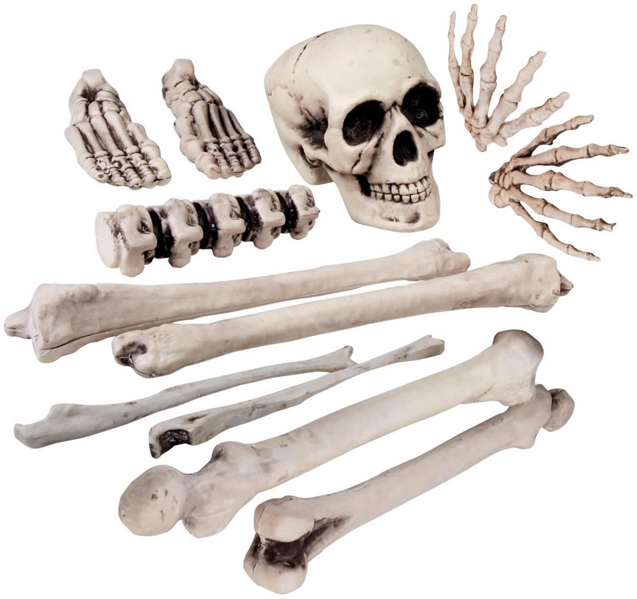 Skelett Menschen Knochen Schädel Karneval Halloween Gruseldeko Deko ...
